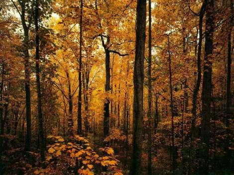 Ça y est, c'est l'automne dans mes yeux et l'hiver dans mon coeur, on se rapproche du ton recherché