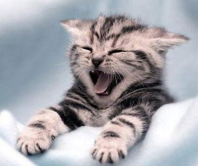 laughing_cats-323